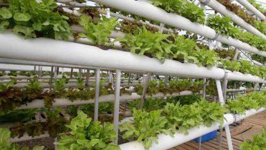 Sprung Greenhouse