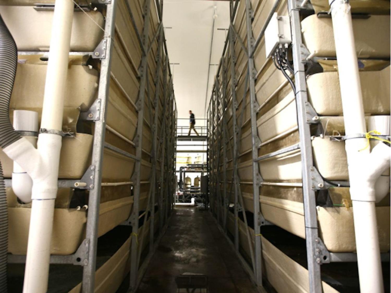 shrimp farm tanks