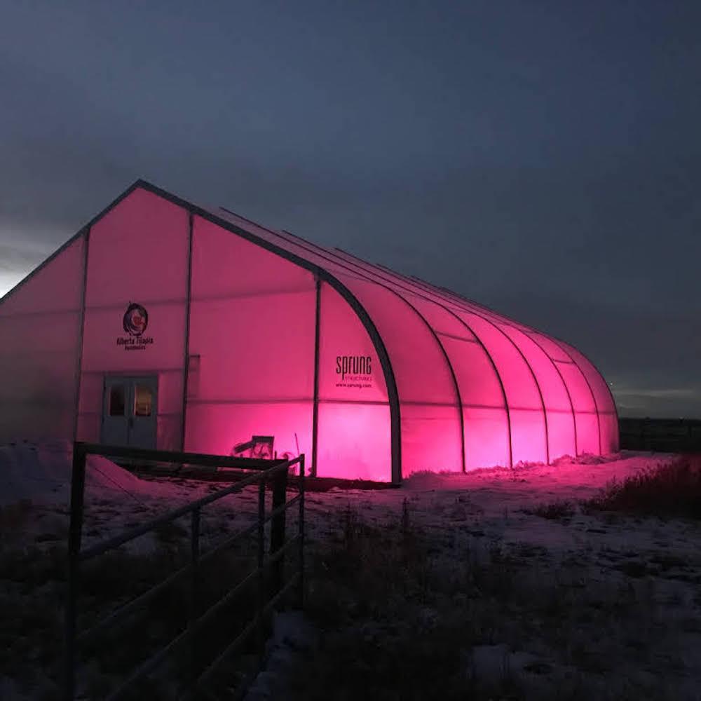 sprung natural light greenhouse